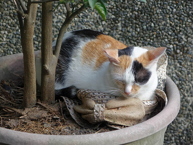 Cats of Houtong, #3210