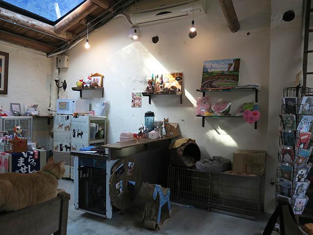 Cats of Houtong, 帥胖胖@Catwalk219, #2463
