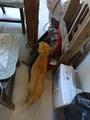 Cats of Houtong, Oreo@Catwalk219, #3215