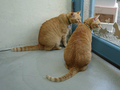 Cats of Houtong, 帥胖胖&Oreo@Catwalk219, #3220