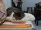 Cats of Houtong, QQ@Catwalk219, #3223