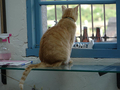 Cats of Houtong, Oreo@Catwalk219, #3232