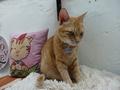 Cats of Houtong, Oreo@Catwalk219, #3242