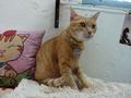 Cats of Houtong, Oreo@Catwalk219, #3243