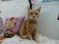 Cats of Houtong, Oreo@Catwalk219, #3244