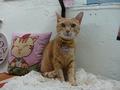 Cats of Houtong, Oreo@Catwalk219, #3245