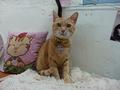 Cats of Houtong, Oreo@Catwalk219, #3246