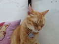 Cats of Houtong, Oreo@Catwalk219, #3248
