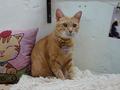 Cats of Houtong, Oreo@Catwalk219, #3249