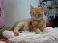 Cats of Houtong, Oreo@Catwalk219, #3250