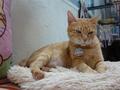 Cats of Houtong, Oreo@Catwalk219, #3251