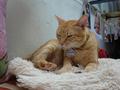 Cats of Houtong, Oreo@Catwalk219, #3252