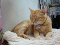 Cats of Houtong, Oreo@Catwalk219, #3253