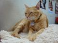 Cats of Houtong, Oreo@Catwalk219, #3254