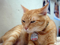 Cats of Houtong, Oreo@Catwalk219, #3255
