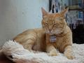 Cats of Houtong, Oreo@Catwalk219, #3256