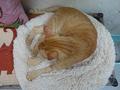 Cats of Houtong, Oreo@Catwalk219, #3257
