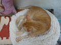 Cats of Houtong, Oreo@Catwalk219, #3258