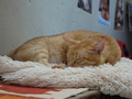 Cats of Houtong, Oreo@Catwalk219, #3265