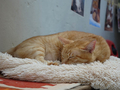 Cats of Houtong, Oreo@Catwalk219, #3266