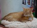 Cats of Houtong, Oreo@Catwalk219, #3269
