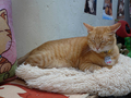 Cats of Houtong, Oreo@Catwalk219, #3270