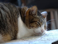 Cats of Houtong, QQ@Catwalk219, #3281