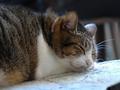 Cats of Houtong, QQ@Catwalk219, #3282