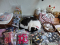 Cats of Houtong, 小蝦蝦@Catwalk219, #3290
