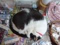 Cats of Houtong, 小蝦蝦@Catwalk219, #3291