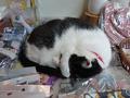 Cats of Houtong, 小蝦蝦@Catwalk219, #3292