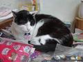 Cats of Houtong, 小蝦蝦@Catwalk219, #3299