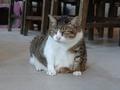 Cats of Houtong, QQ@Catwalk219, #3312