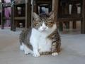 Cats of Houtong, QQ@Catwalk219, #3313