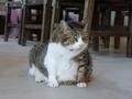 Cats of Houtong, QQ@Catwalk219, #3314