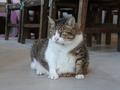 Cats of Houtong, QQ@Catwalk219, #3315