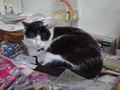 Cats of Houtong, 小蝦蝦@Catwalk219, #3317