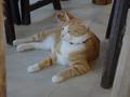 Cats of Houtong, 圓仔妹@Catwalk219, #3319