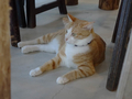 Cats of Houtong, 圓仔妹@Catwalk219, #3320