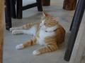Cats of Houtong, 圓仔妹@Catwalk219, #3321