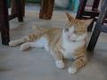 Cats of Houtong, 圓仔妹@Catwalk219, #3322