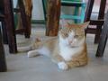 Cats of Houtong, 圓仔妹@Catwalk219, #3323