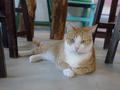 Cats of Houtong, 圓仔妹@Catwalk219, #3324