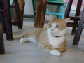 Cats of Houtong, 圓仔妹@Catwalk219, #3326