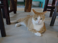 Cats of Houtong, 圓仔妹@Catwalk219, #3328