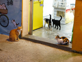 Cats of Houtong, #3371