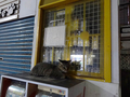 Cats of Houtong, #3378