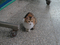 Cats of Houtong, #2474