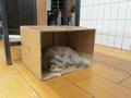 Cats of Yi Tien Palace, #2493