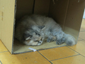 Cats of Yi Tien Palace, #2495